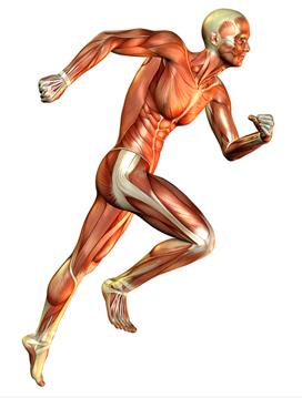 Løb vs styrketræning